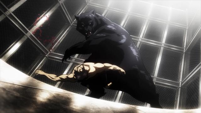 O urso destrói Akari